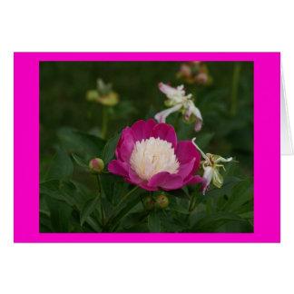 Cartes Roses indien et blanc Peony.jpg