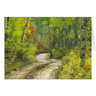 Cartes Route avec des couleurs d'automne et trembles dans