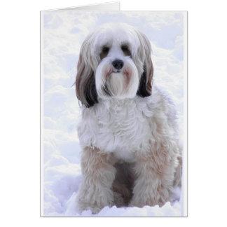 Cartes Sable et blanc de Terrier tibétain