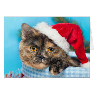 Cartes Saison des vacances de Ronronnement-fect de chat