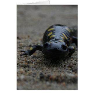 Cartes Salamandre repérée