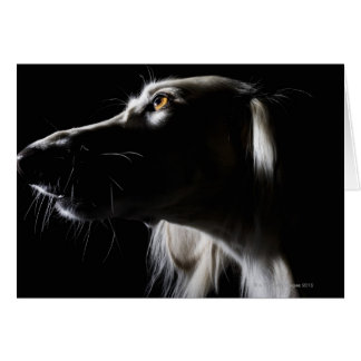 Cartes Saluki, portrait