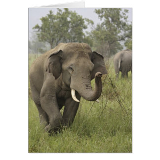 Cartes Salutation éléphant indien/asiatique, Corbett
