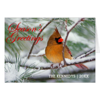 Cartes Salutations - cardinal du nord dans le pin neigeux