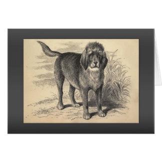 Cartes Salutations vintages d'Otterhound