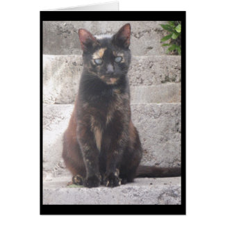 Cartes Samantha le chat de Bush