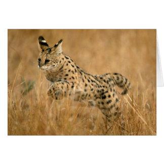Cartes Sauter de Serval (Serval de Leptailurus)