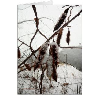 Cartes Sauterelle épineuse d'hiver