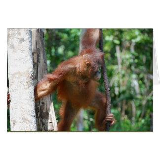 Cartes Sauvez la faune de grandes singes