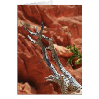 Cartes Scène de canyon de Bryce