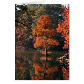 Cartes Scènes d'automne - arbre de Cypress