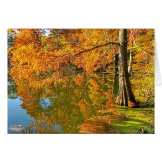 Cartes Scènes d'automne - marais de Cypress
