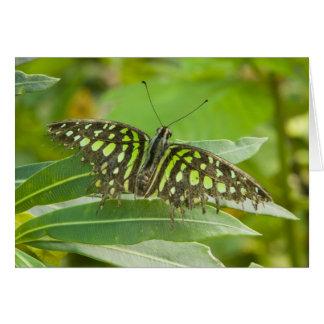 Cartes Se Asie, Thaïlande, papillon coupé la queue de