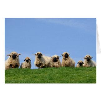 Cartes sept moutons curieux de rasta