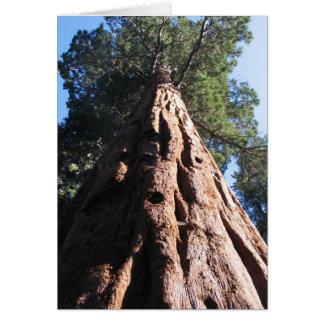Cartes Séquoia géant, parc national de séquoia