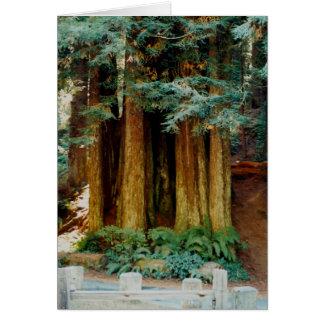 Cartes Séquoias