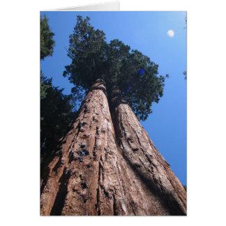 Cartes Séquoias géants jumeaux, parc national de séquoia