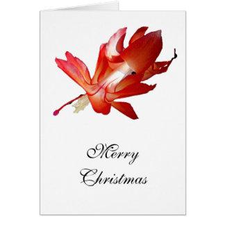 Cartes Série de Joyeux Noël de cactus de Noël