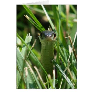 Cartes Serpent de jarretière dégrossi rouge dans l'herbe