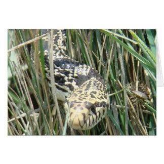 Cartes Serpent de R0004 Taureau