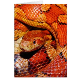 Cartes Serpent de tapis