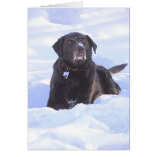 """Cartes """"Sidney le chien de merveille """""""