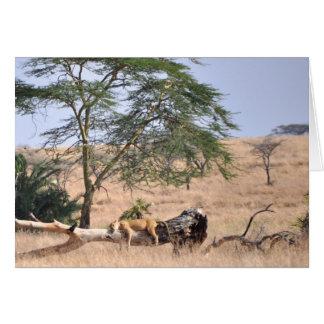 Cartes Sièste, Serengeti