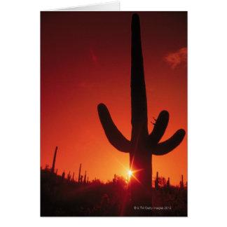 Cartes Silhouette de cactus au crépuscule, ressortissant