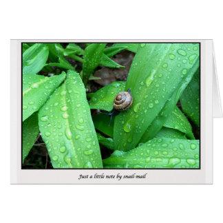 Cartes snail mail