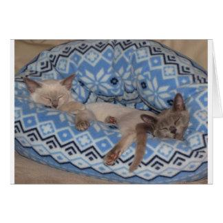Cartes Sommeil de deux chatons de Tonkinese