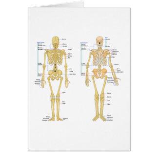 Cartes Squelette humain marqué diagramme d'anatomie