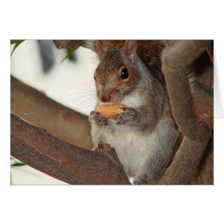 Cartes squirrelfriend