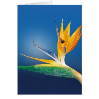 Cartes Strelitzia. Oiseau de fleur de paradis