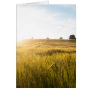 Cartes Sun au-dessus de wheatfield