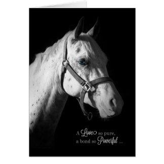 Cartes Sympathie d'animal familier - cheval blanc sur le