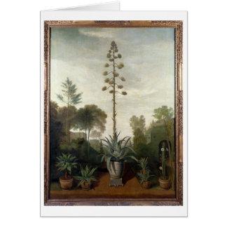 Cartes T33047 un jardin botanique