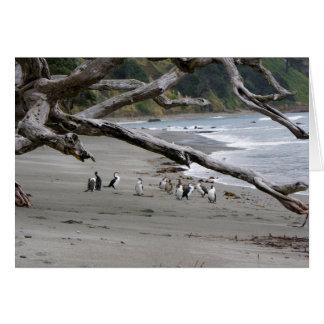 Cartes Tapis à longs poils pies sur la plage