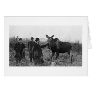 Cartes Tapotement d'une photo 1921 d'orignaux