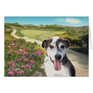 Cartes Tarte dans un domaine des dahlias (chien sur la