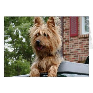 Cartes Terrier australien