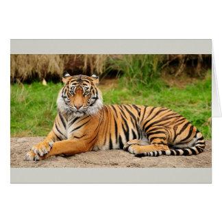 Cartes Tigre de Bengale