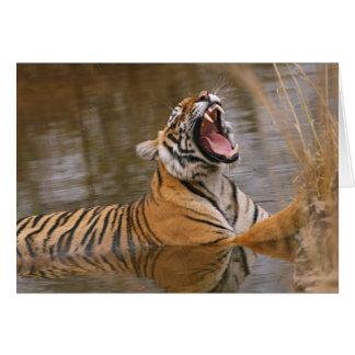 Cartes Tigre de Bengale royal baîllant dans l'étang de
