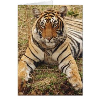 Cartes Tigre de Bengale royal, parc national de