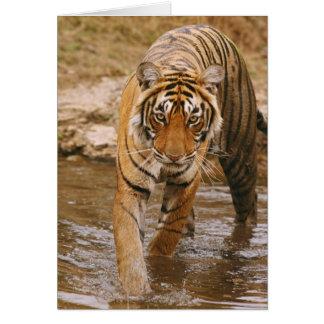 Cartes Tigre de Bengale royal sortant de l'étang de