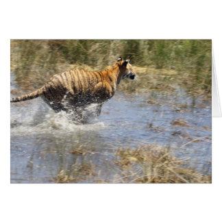 Cartes Tigre (Panthera le Tigre) fonctionnant par l'eau