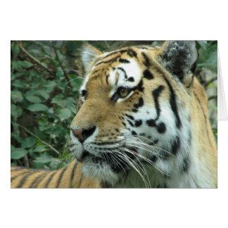 Cartes Tigre sibérien