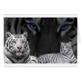 Cartes Tigres blancs
