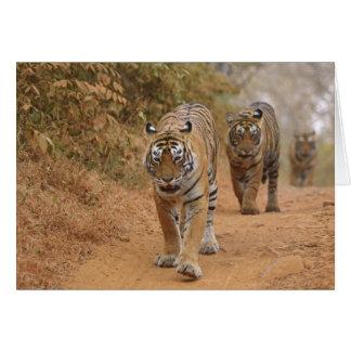 Cartes Tigres de Bengale royaux marchant le long de la