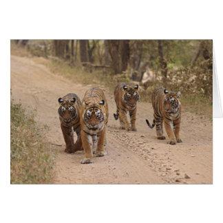 Cartes Tigres de Bengale royaux sur la voie, Ranthambhor