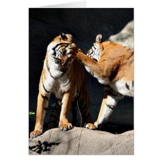 Cartes Tigres de sockem de Rockem